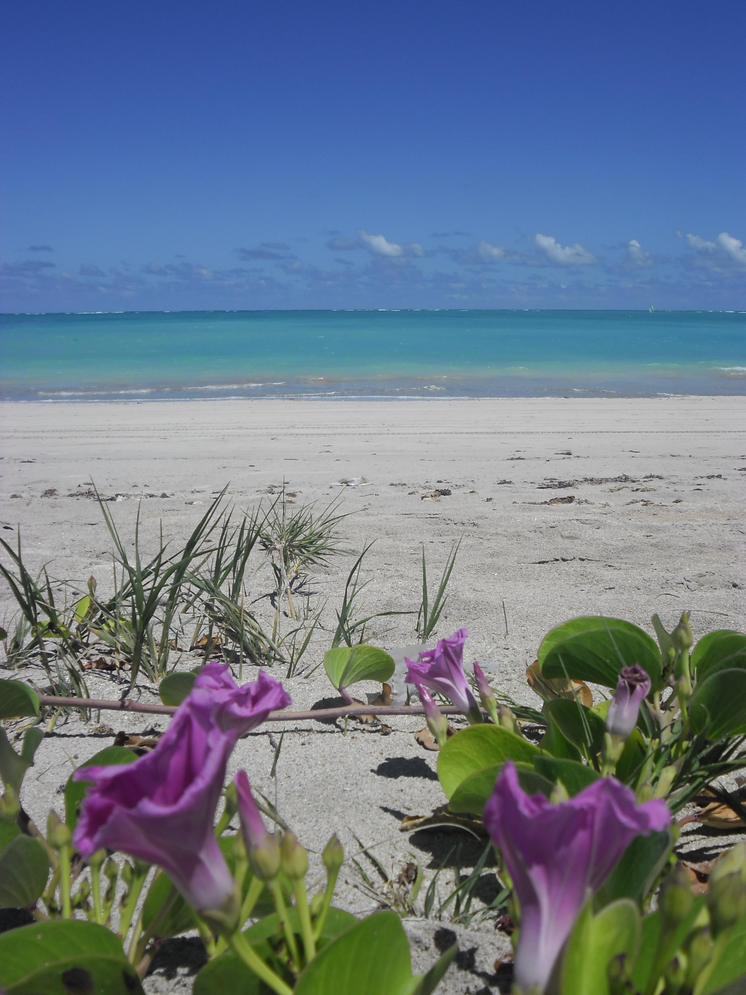 Praia de antunes 2